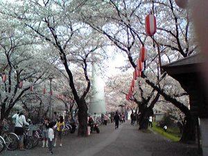 羽村の桜まつり