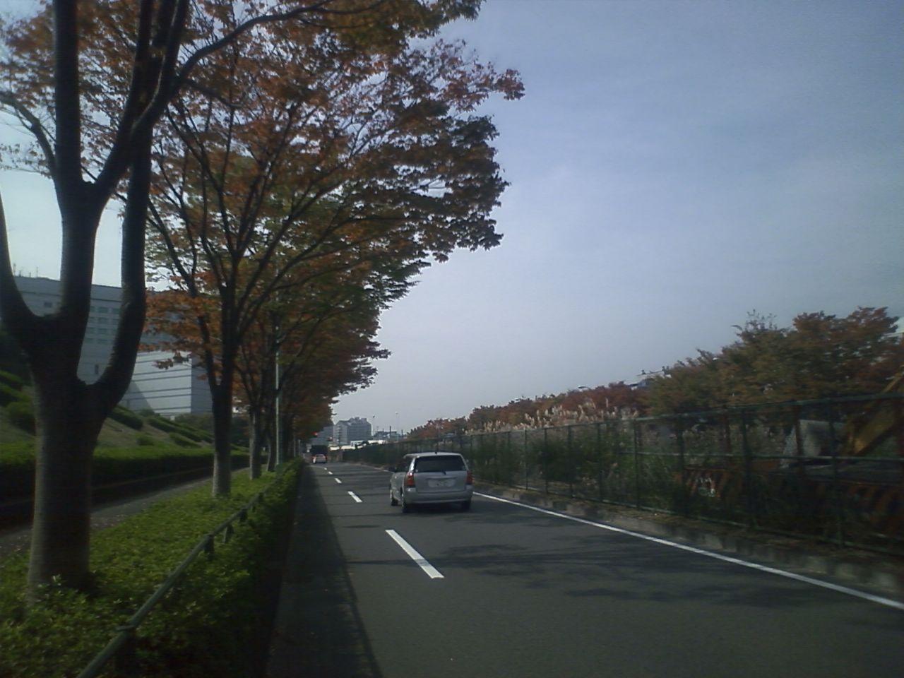 秋の尾根幹線