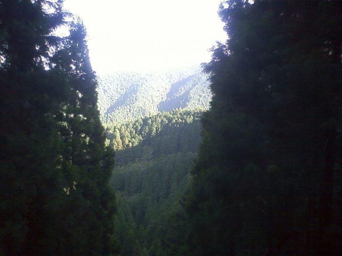 山深い醍醐林道