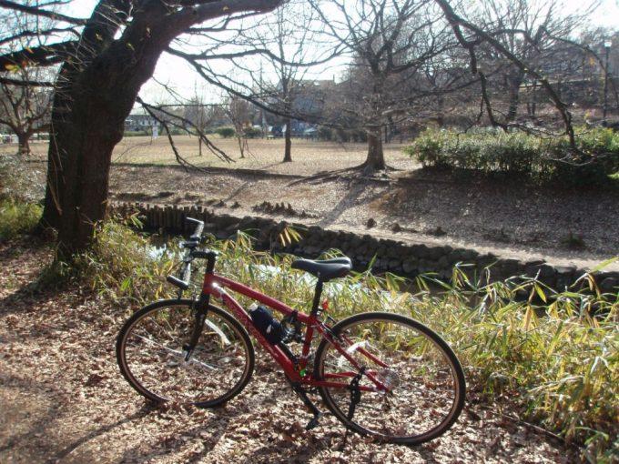 井の頭公園内神田川昔ながらの土手