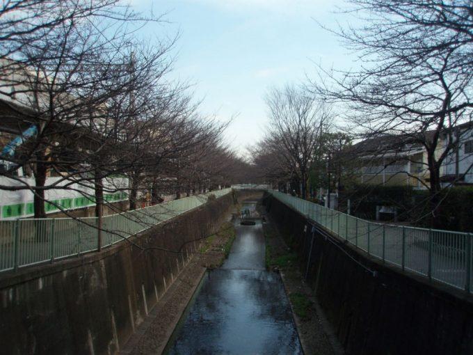 神田川高井戸駅の桜並木