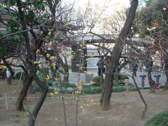 湯島天神の梅園