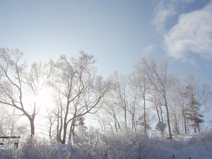 白い雪をまとった安比高原の木々