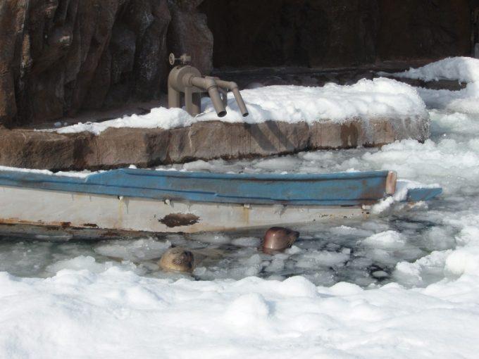 冬の旭山動物園雪とアザラシ
