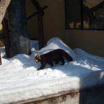 ニセコスキー旅行記2009 ~5日目 ③~