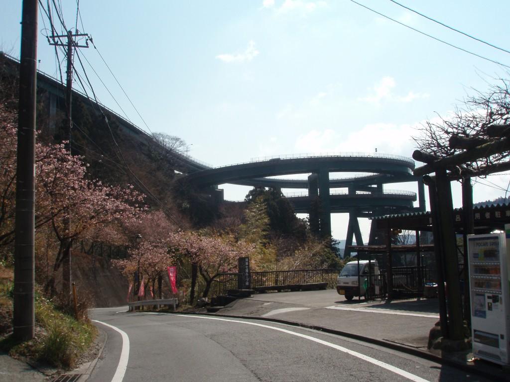 ループ橋と河津桜