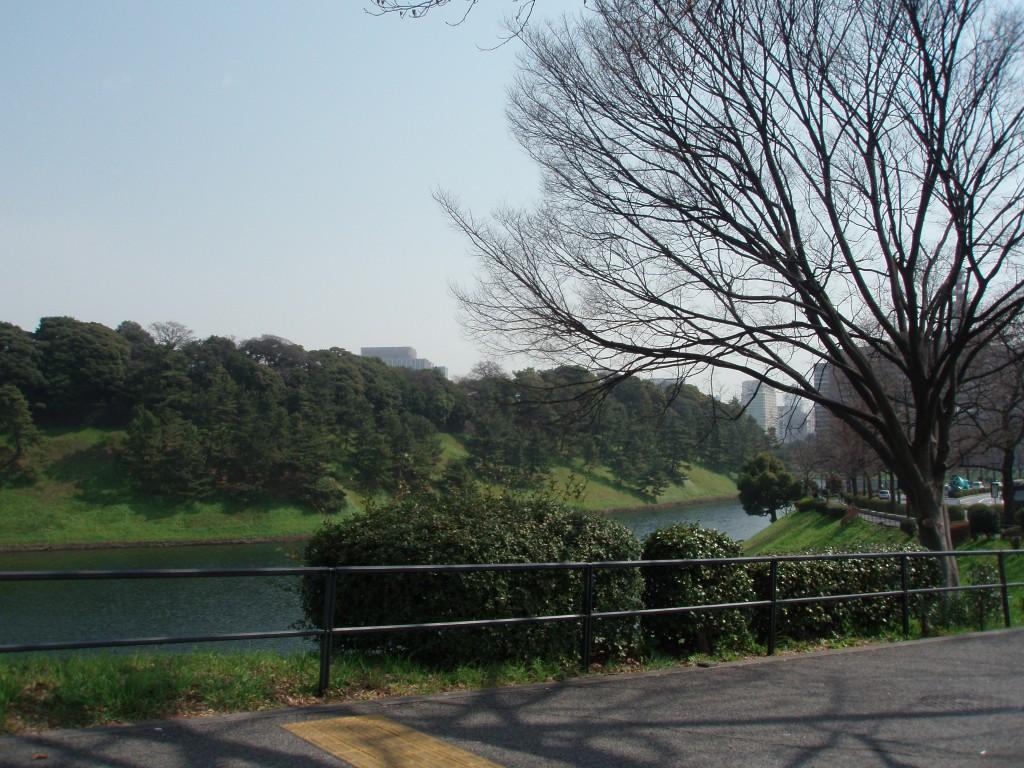 春の皇居のお堀