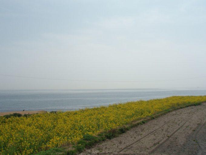 淡路島の海と菜の花
