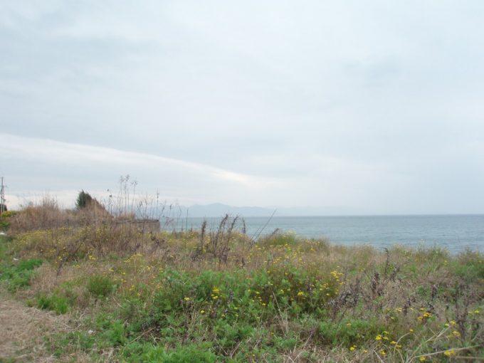 淡路島海辺の花