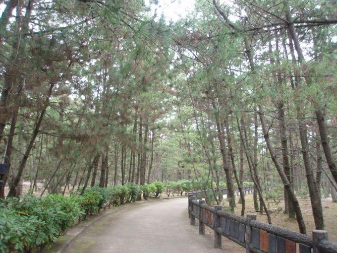 淡路島慶野松原松林の中の小径