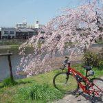 鴨川沿いの桜と愛車