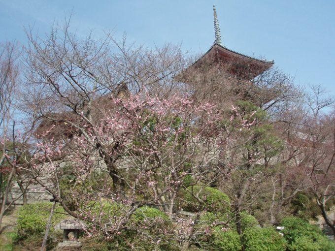 咲きはじめの桜と清水寺の塔
