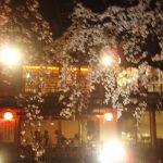 祇園の灯りに照らされる夜桜