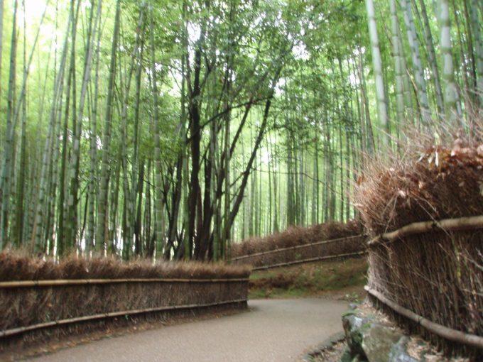 京都嵐山竹林と垣根