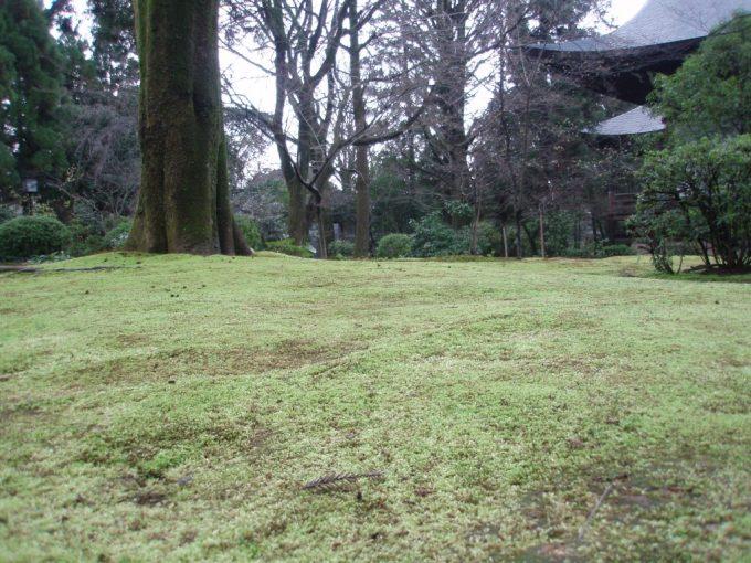 広隆寺の苔むした庭