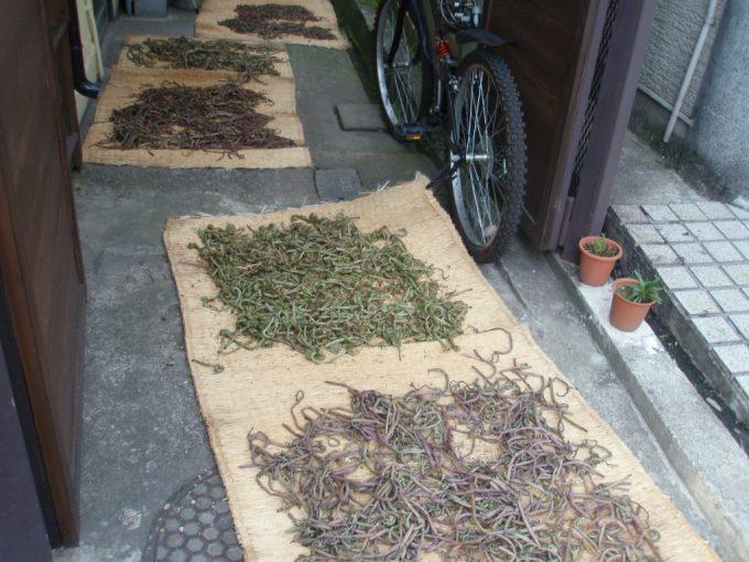 会津若松の路地に干された山菜