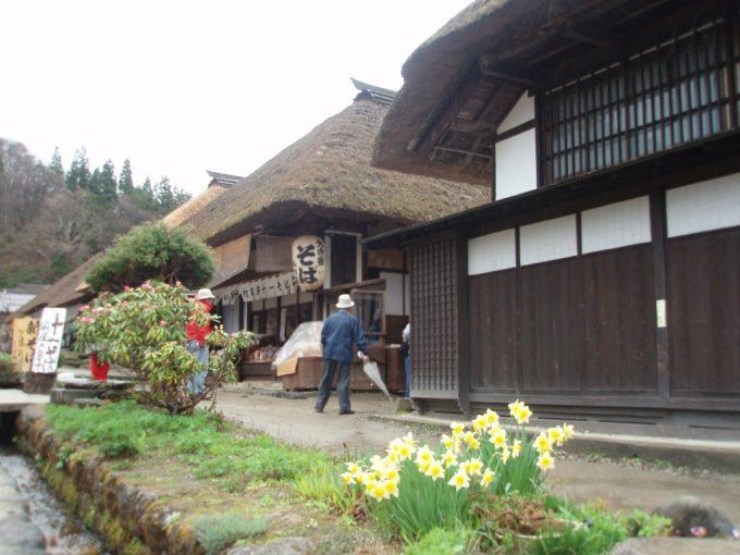 大内宿水仙と茅葺屋根