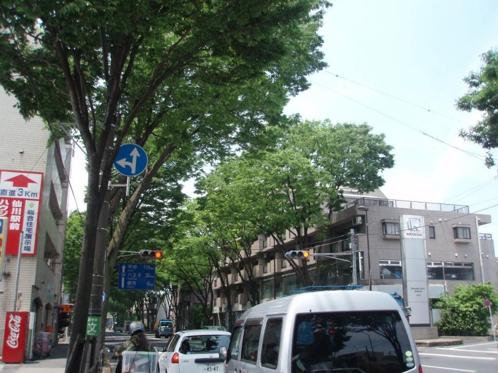 甲州街道初夏の街路樹