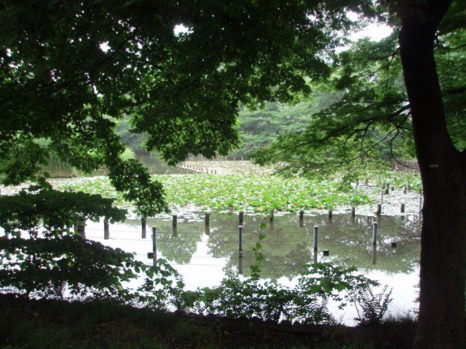 善福寺下池