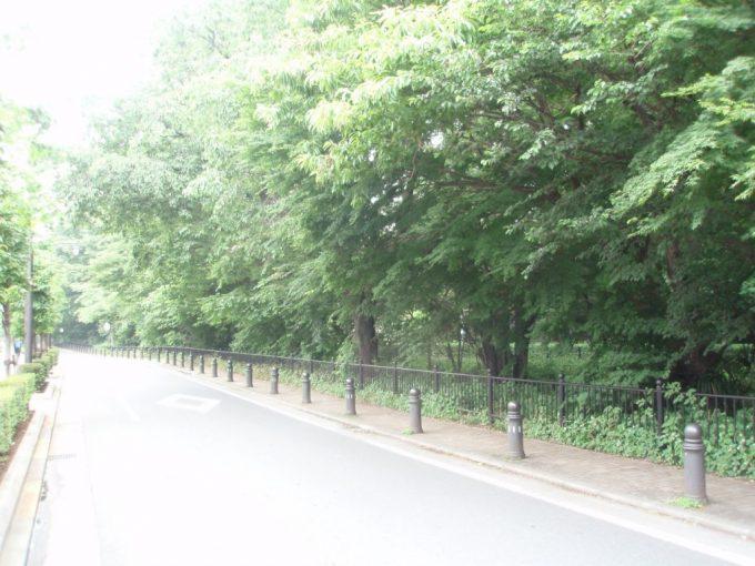 三鷹玉川上水沿いの道