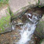 野川公園の勢いよく湧く清水