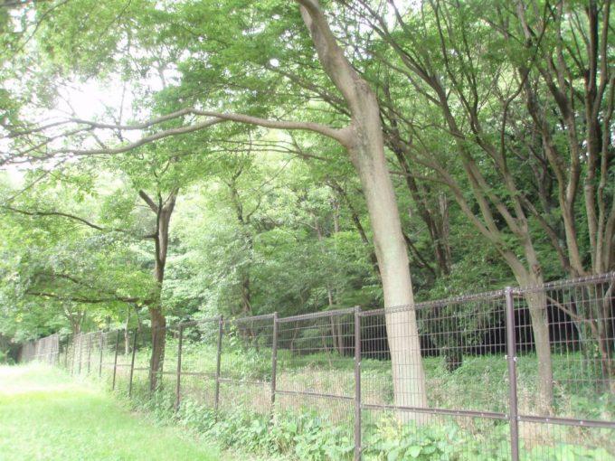 野川公園内の国分寺崖線