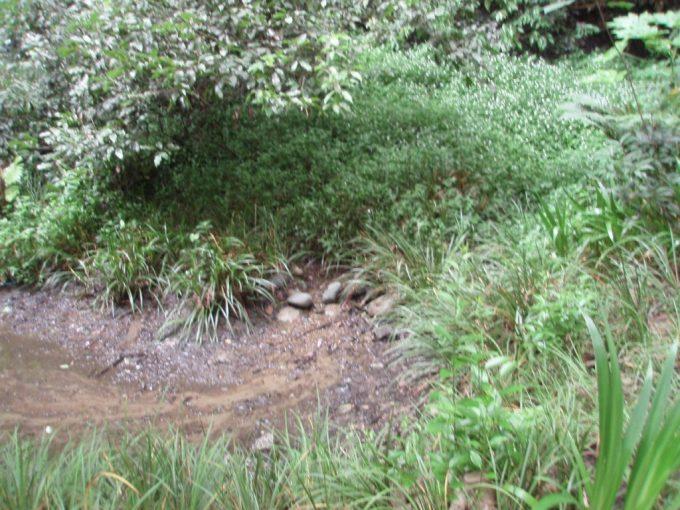等々力渓谷しみ出る湧水