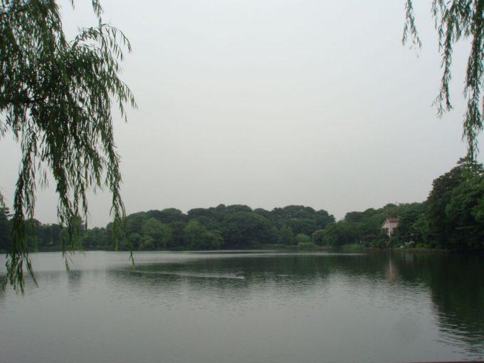 都会のオアシス洗足池