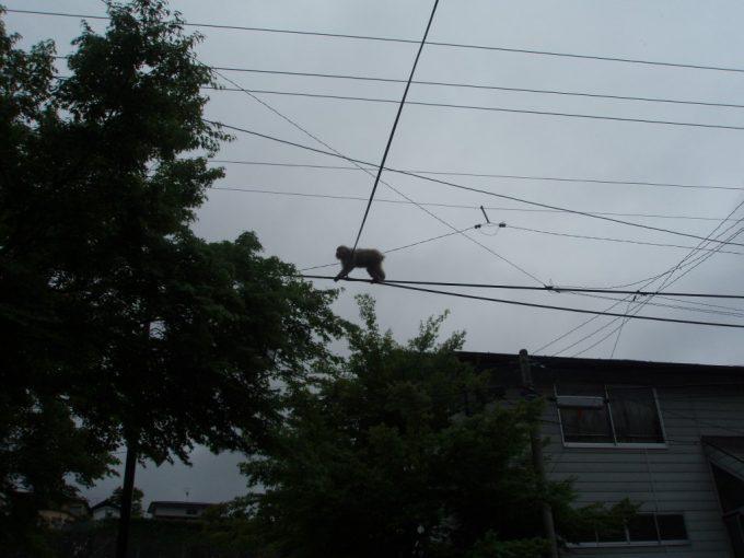渋温泉に現れた猿