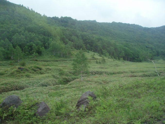 初夏の緑に覆われた志賀高原