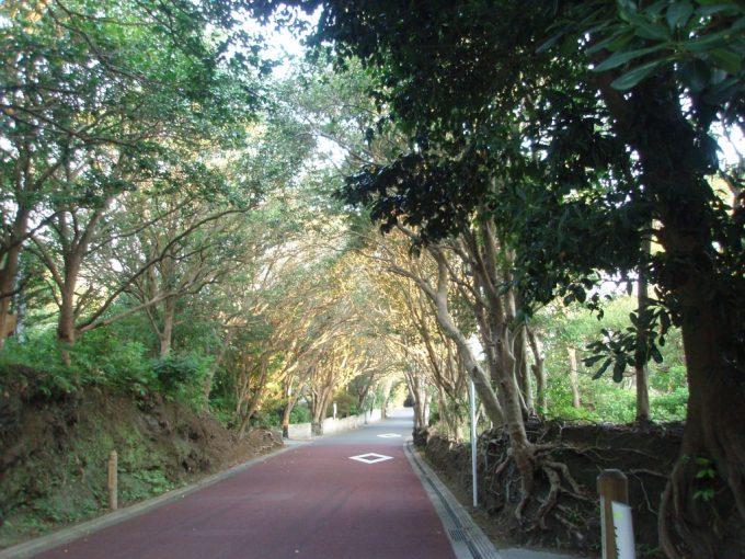 伊豆大島椿トンネル