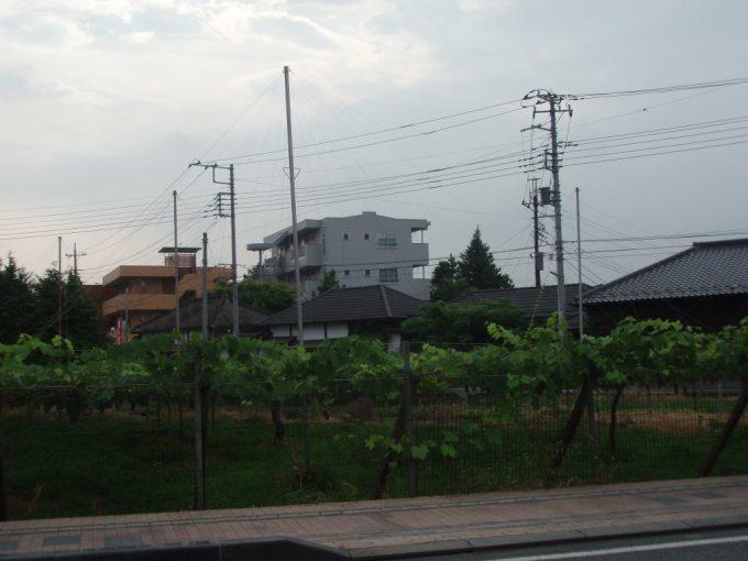 石和の住宅街のぶどう畑