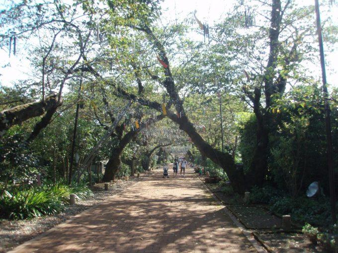 御殿場高原時之栖桜のトンネル