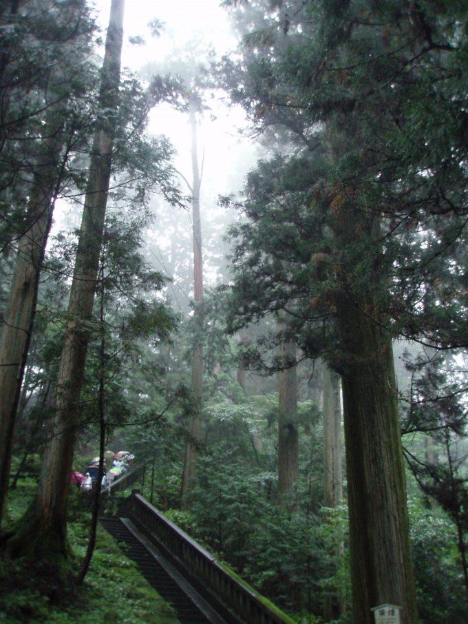 雨の日光東照宮荘厳な杉並木