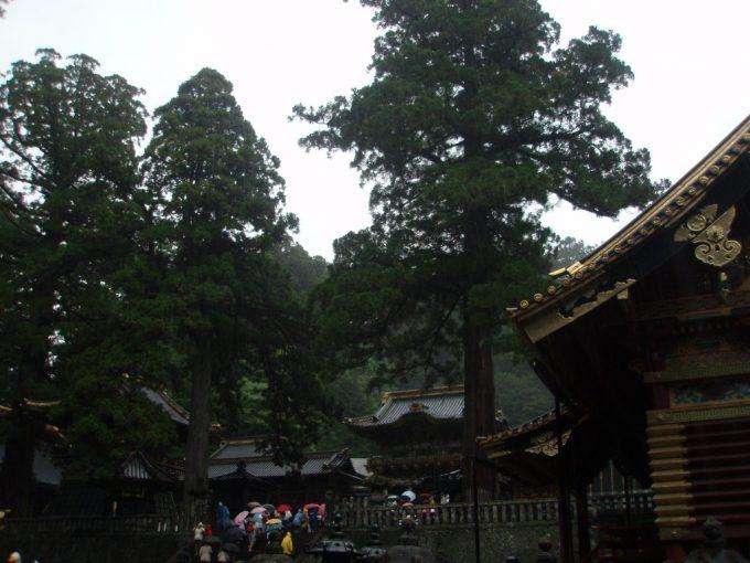 杉に覆われる雨の日光東照宮