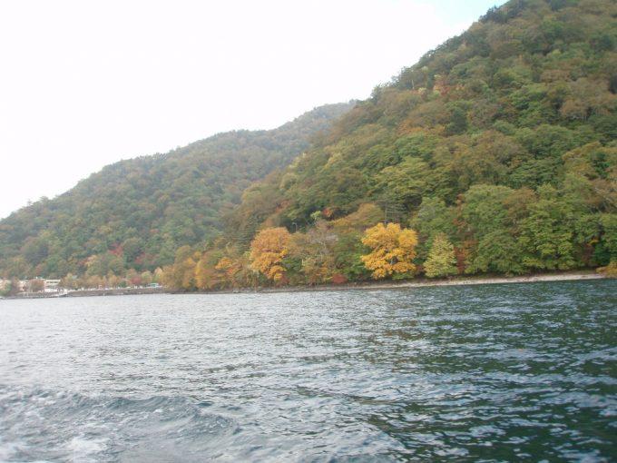 中禅寺湖畔の鮮やかないちょう
