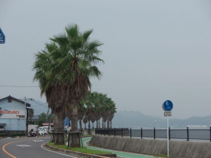生口島海沿いの道と棕櫚