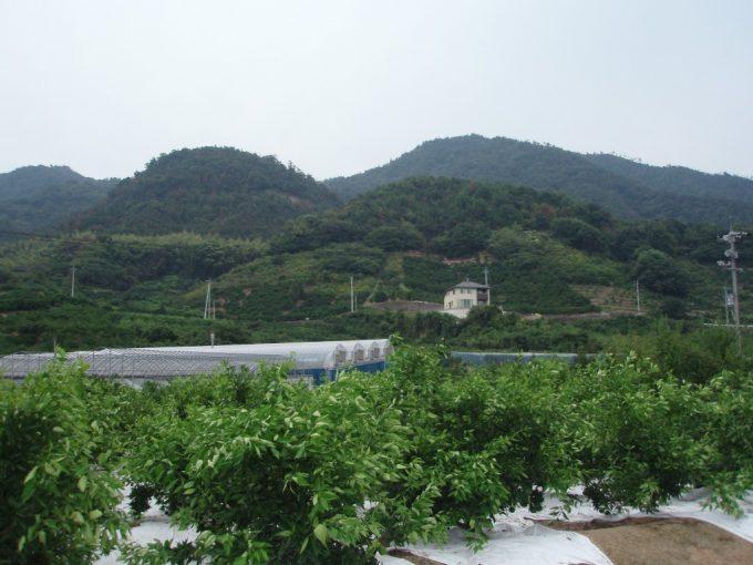 生口島の段々畑