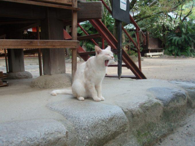 石手寺の白猫