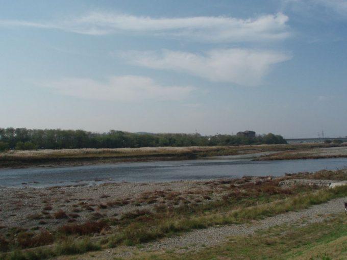 多摩川すすき野原