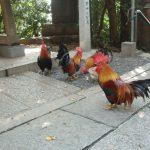 谷保天満宮の立派な雄鶏
