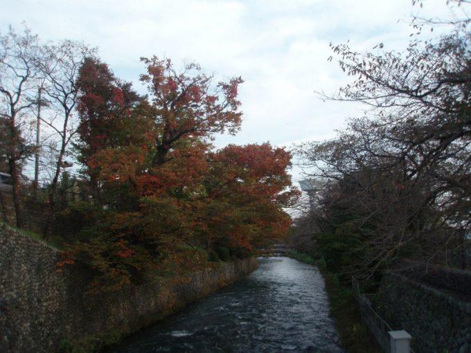 秋の装い玉川上水