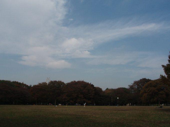 都心の広い空秋の代々木公園