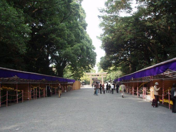 秋の明治神宮菊花展