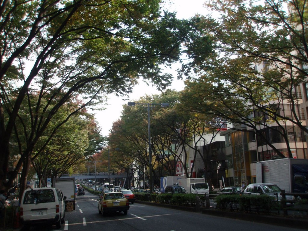 秋色の表参道