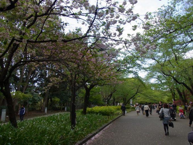 上野公園を彩る花