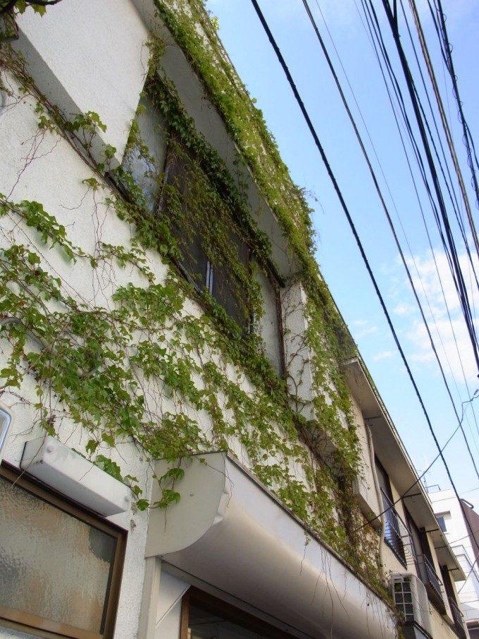 白いアパートと緑の蔦