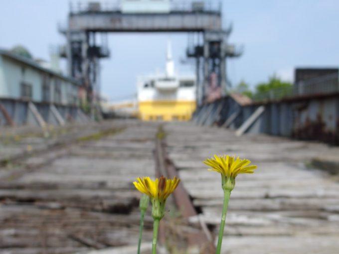 朽ちようとする可動橋桟橋に咲くたんぽぽの花