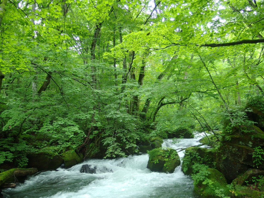 夏の奥入瀬渓流石ヶ戸より歩きはじめる