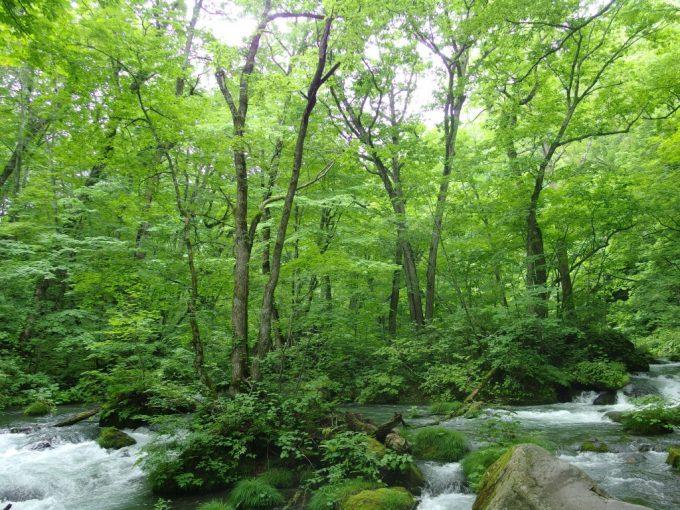 木々と岩、苔に包まれる奥入瀬渓流